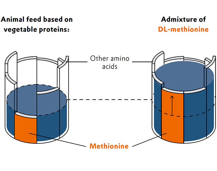 Barrels with amino acids