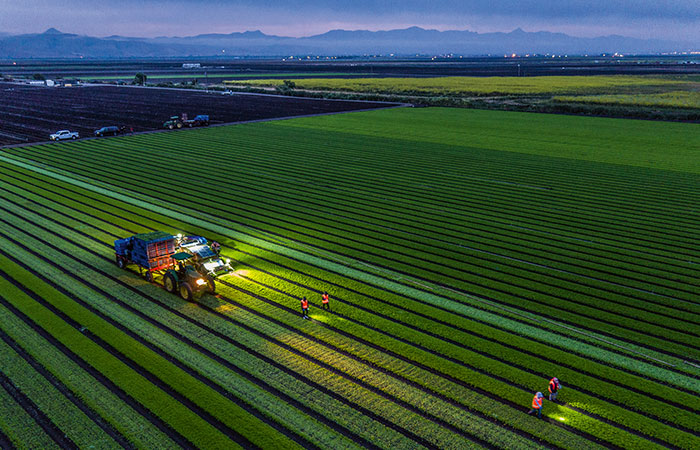 Salad harvest on californian organic farm